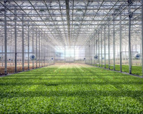 brightfarms_greenhouse_chicago